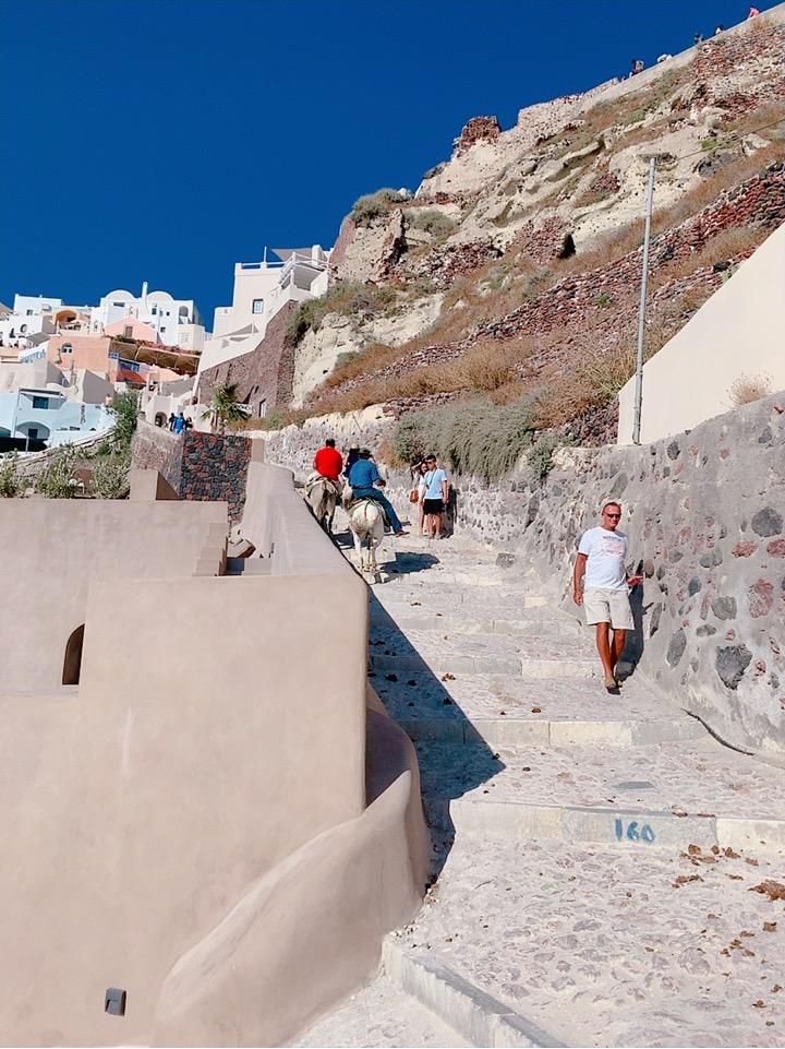 サントリーニ島 ロバ ギリシャ