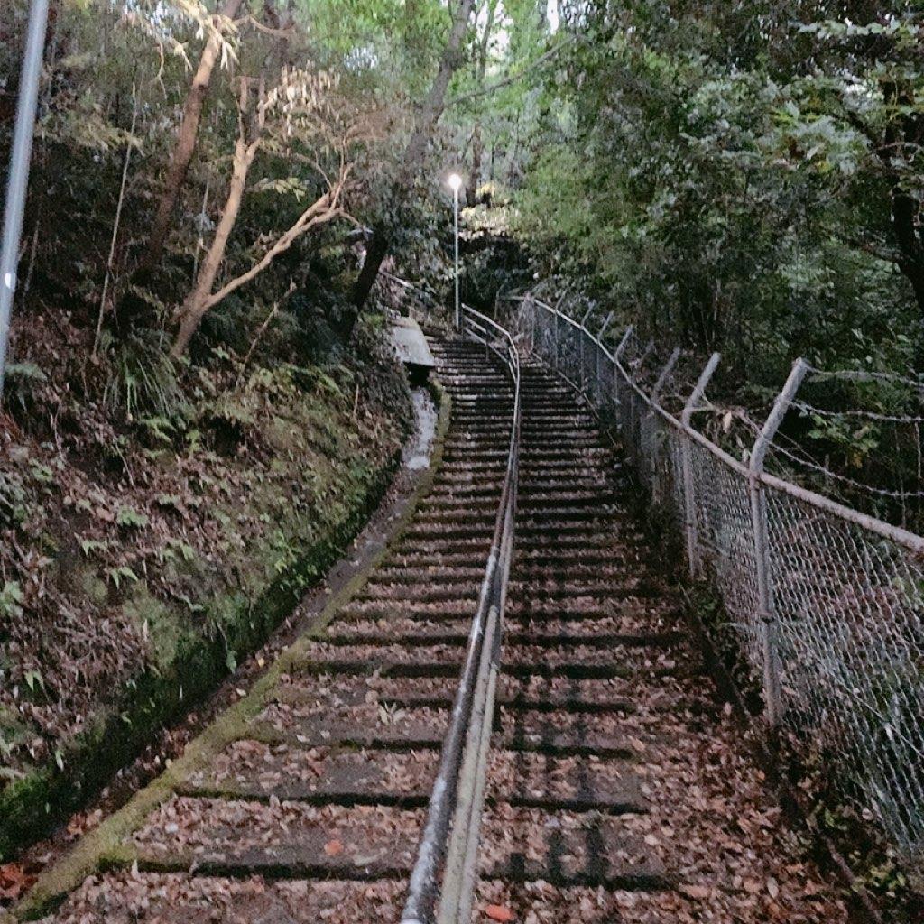 鹿児島 城山公園 展望台 夜 危ない 暗い 観光 歩き ハード