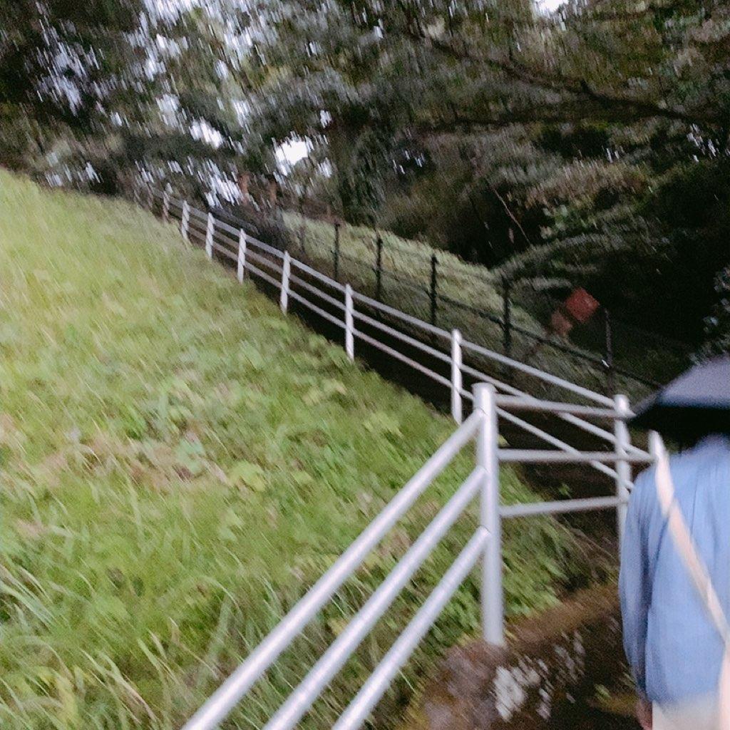 鹿児島 城山公園 展望台 夜 危ない 暗い 観光 歩き